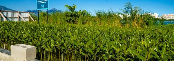 Espécies nativas estão sendo plantadas na FMP